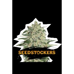 Big Bud  SeedStockers - Sativagrowshop.com