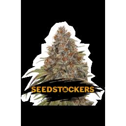 BLACKBERRY GUM SeedStockers - Sativagrowshop.com