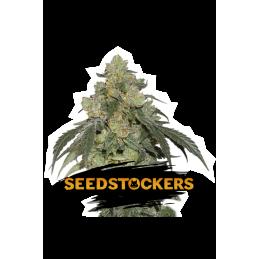 COOKIES AND CREAM SeedStockers - Sativagrowshop.com