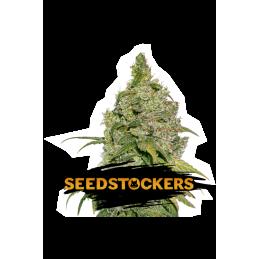 SeedStockers - Sativagrowshop.com