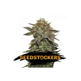 FRUIT CAKE SeedStockers - Sativagrowshop.com