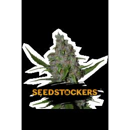 GELATO 41 FAST FEM SeedStockers - Sativagrowshop.com