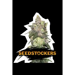 GIRL SCOUT COOKIES SeedStockers - Sativagrowshop.com