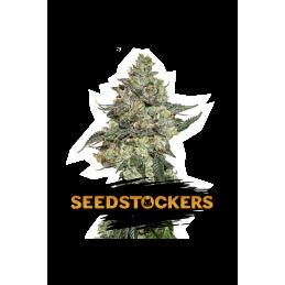 GIRL SCOUT COOKIES AUTO SeedStockers - Sativagrowshop.com