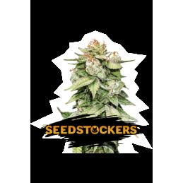GORILLA GLUE AUTO SeedStockers - Sativagrowshop.com