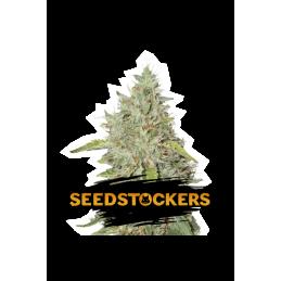 NORTHERN LIGHTS AUTO SeedStockers - Sativagrowshop.com