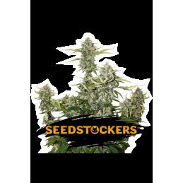 O.G. CANDY DAWG KUSH AUTO SeedStockers - Sativagrowshop.com