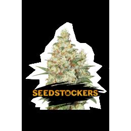 OG KUSH AUTO SeedStockers - Sativagrowshop.com