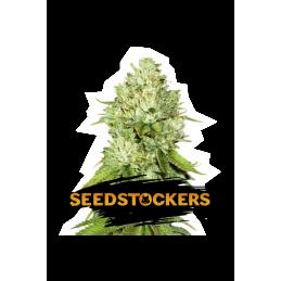 PINEAPPLE SeedStockers - Sativagrowshop.com
