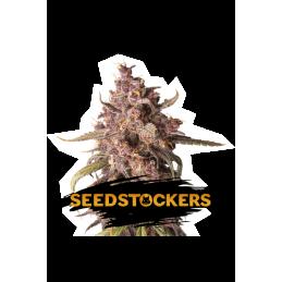 PURPLE PUNCH AUTO SeedStockers - Sativagrowshop.com