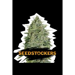 SUPER SKUNK SeedStockers - Sativagrowshop.com