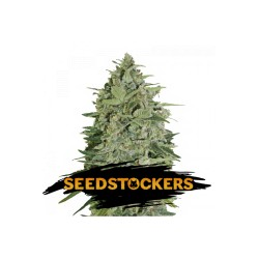 SUPER SKUNK AUTO SeedStockers - Sativagrowshop.com