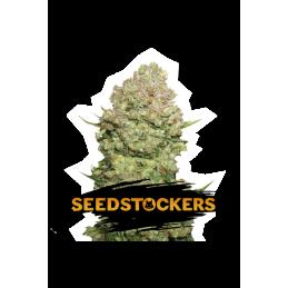 WHITE WIDOW AUTO SeedStockers - Sativagrowshop.com