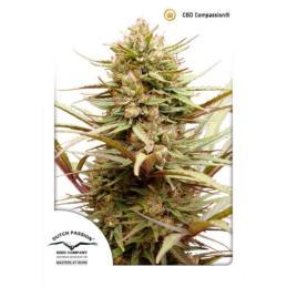 BIOTHRIVE GROW 5 L * GENERAL HIDROPONICS - Imagen 1