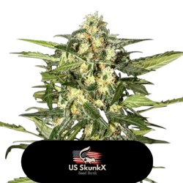 OG Rock - US SKUNK X
