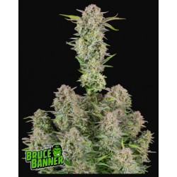 Bruce Banner Auto