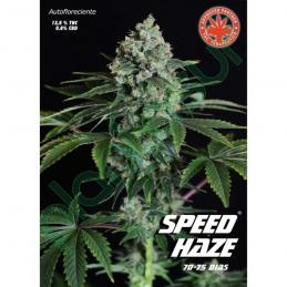 Speed Haze Pure Seeds