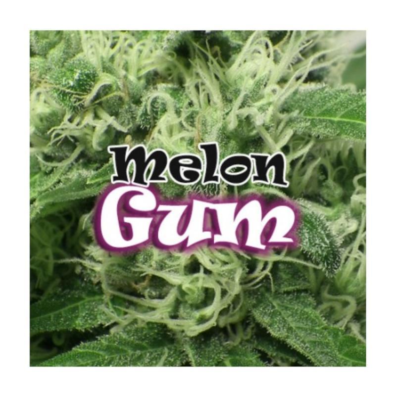 Melon Gum DR. UNDERGROUND