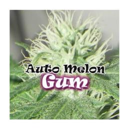 AUTO MELON GUM DR. UNDERGROUND