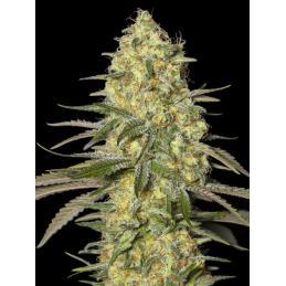 IONIC COCO GROW 5 L. * IONIC - Imagen 1