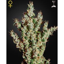 SISTEMA HIDROPONICO AMAZON 32 PLANTAS * SISTEMAS HIDROPONICOS - Imagen 1