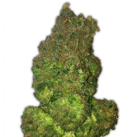 Fruit Punch Auto HEAVY WEIGHT