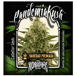 Pandemia THE KUSH BROTHERS