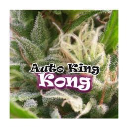 AUTO KING KONG DR. UNDERGROUND