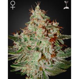 pH Perfect Bloom 10L