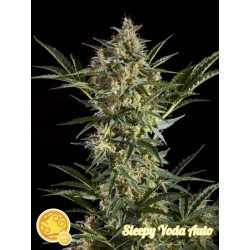 SLEEPY YODA AUTO PHILOSOPHER SEEDS