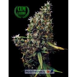 1 UND FEM - NORTHERN LIGHT BLUE AUTO (AUTOMATIC LINE) * DELICIOUS 1 UND FEMINIZADA - Imagen 1