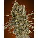 Bandeja semillero 72 alveolos
