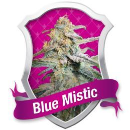 BLUE MISTIC ROYAL QUEEN