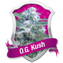 6 UND REG - OG GRAPE KRYPT * DNA GENETICS LIMITED 6 UND REGULARES - Imagen 1