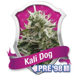 6 UND REG - SUPER LEMON OG * DNA GENETICS LIMITED 6 UND REGULARES - Imagen 1