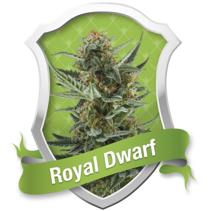 ROYAL DWARF ROYAL QUEEN