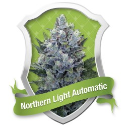 Northern Light Automatic ROYAL QUEEN