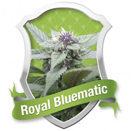 ROYAL BLUEMATIC ROYAL QUEEN