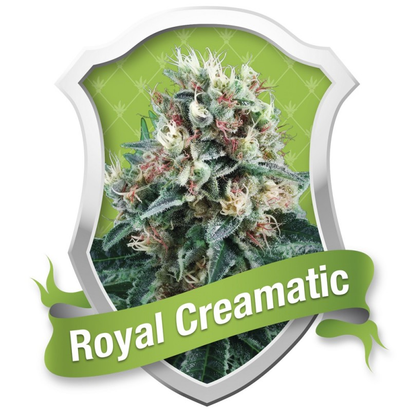 ROYAL CREAMATIC ROYAL QUEEN