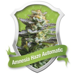 Amnesia Haze Automatic ROYAL QUEEN