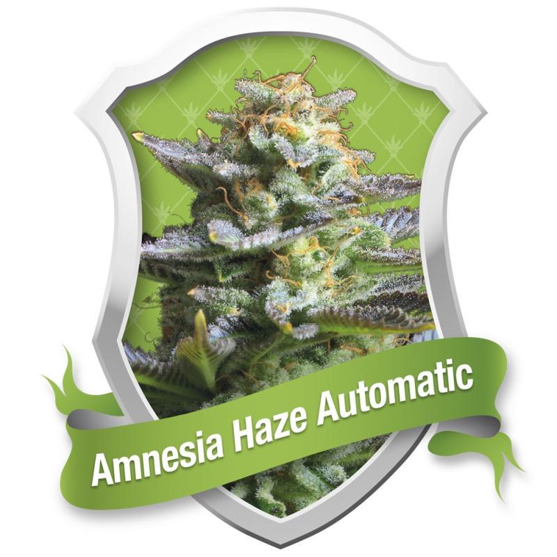 Amnesia Haze Automatic ROYAL QUEEN