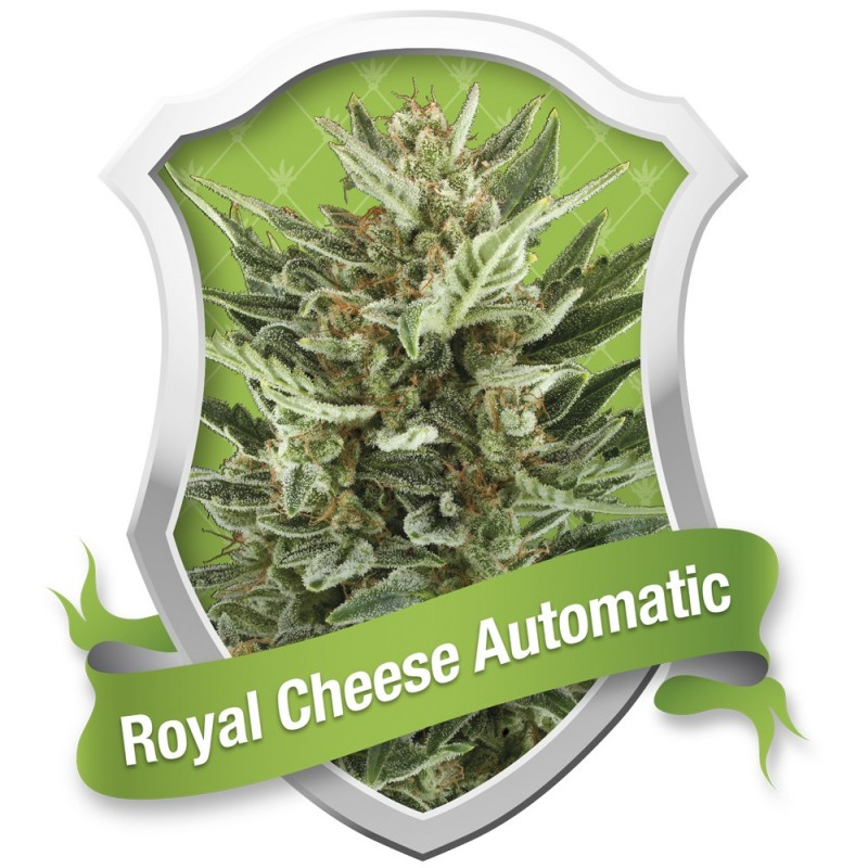 ROYAL CHEESE AUTOMATIC ROYAL QUEEN