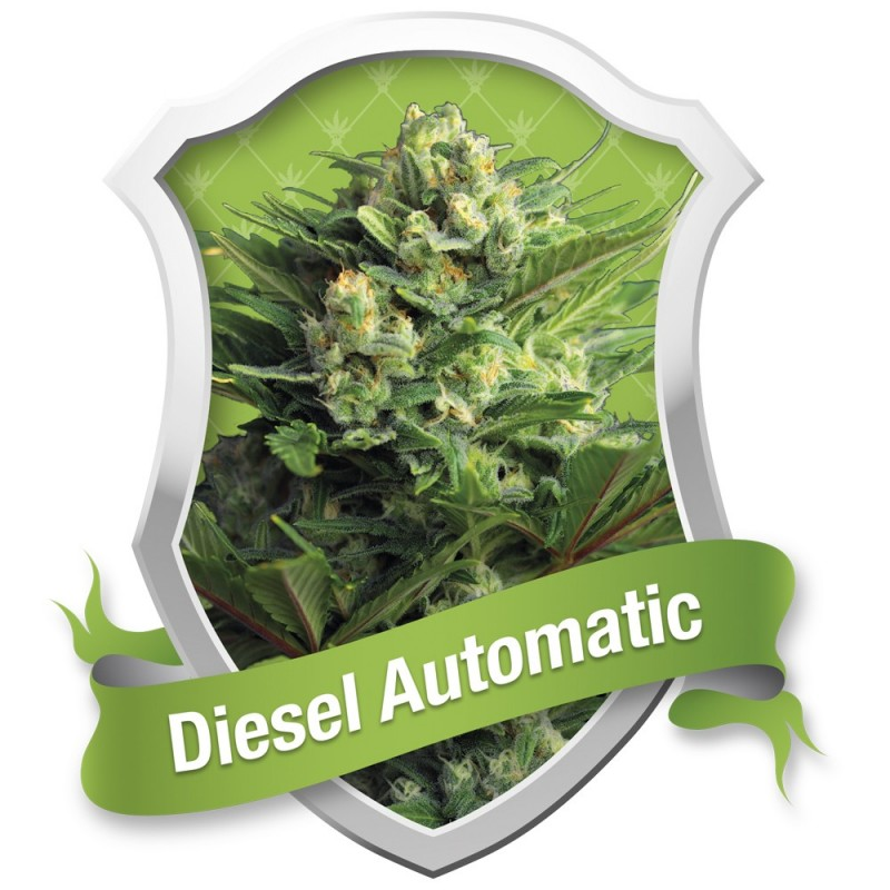 DIESEL AUTOMATIC ROYAL QUEEN
