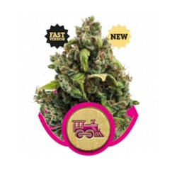 Candy Kush Express - Fast ROYAL QUEEEN